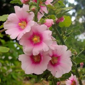 A nice flower on Skiathos