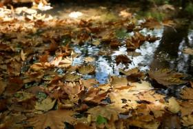 0413_Herbststimmung