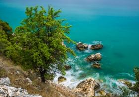 Baum und Felsen am Meer