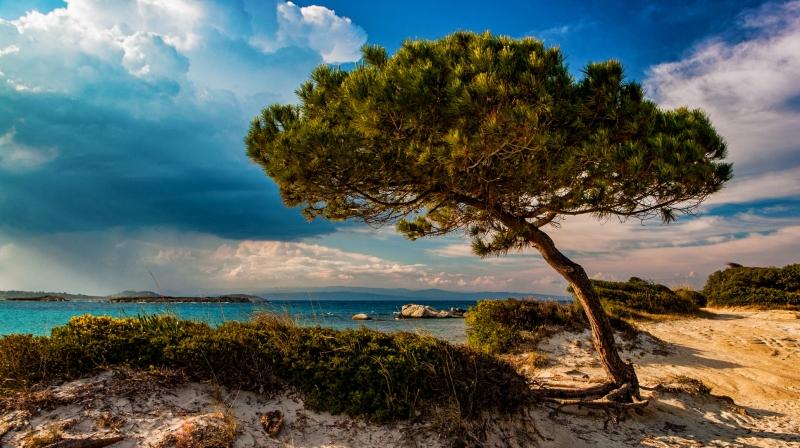 Chalkidiki - Vourvourou: een eenzame boom