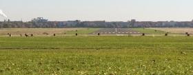 Tempelhof Airport Runway