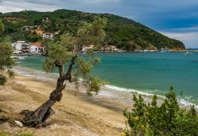 Olive Tree hiding Platanias