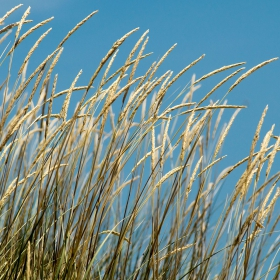 Skiathos - Some nice gras at Elias Beach