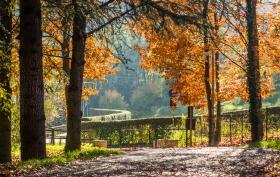 Via Castagneta Bergamo - Herfstkleuren