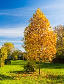 Een park in Bergamo met mooie kleuren tijdens de herfst